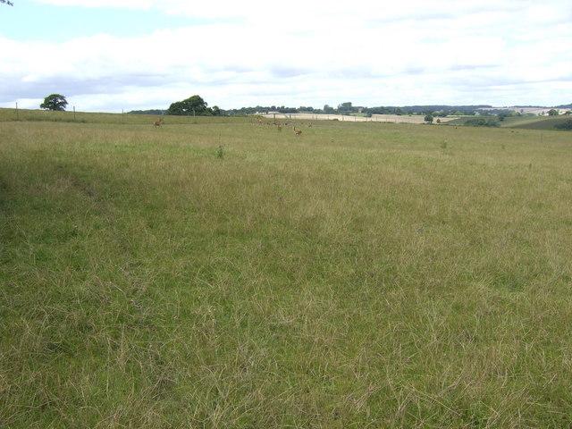 Deer pasture east of Stottesdon