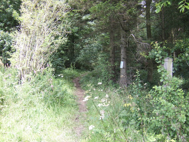Footpath into Birchen Park Wood