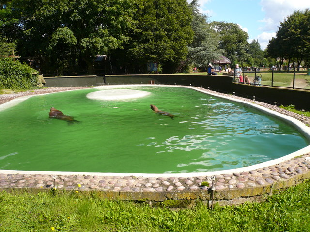 Twycross Zoo - Sealions