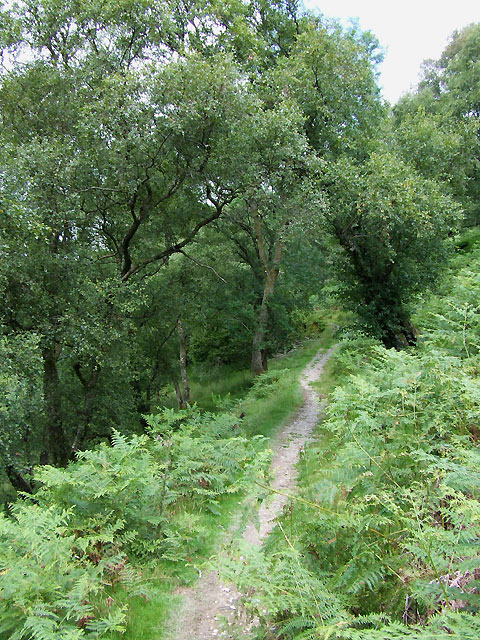Bridleway on Woodland Slope, Cwm Doethie, Ceredigion