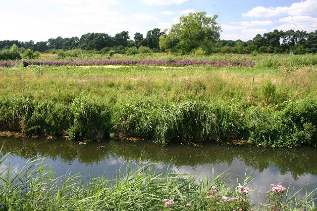 River Little Ouse near Thetford