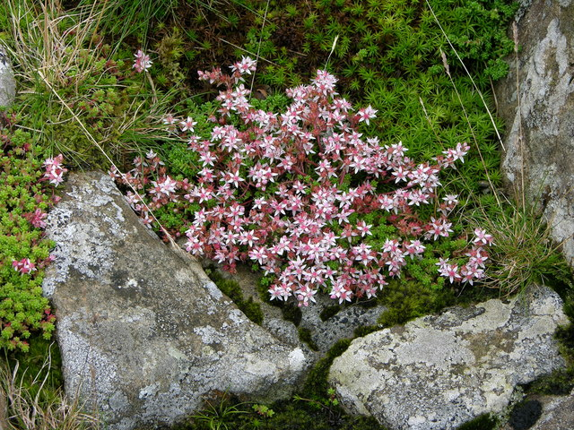 Flower growing in between rock