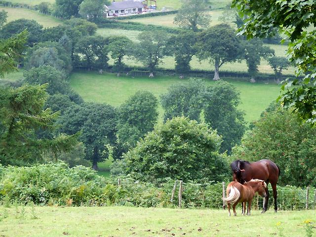 Farmland with Horses, Llanddewi-Brefi, Ceredigion