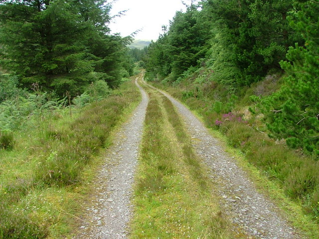 Forest Track in Gleann Udalain
