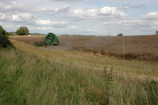 Harvesting Oil Seed Rape near Condicote