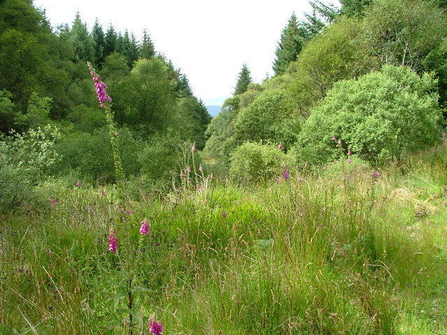 Foxglove and Mixed Trees