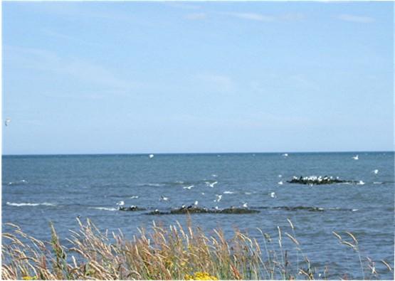 Seabirds near East Long Skelly