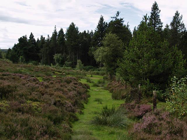 Moor's edge