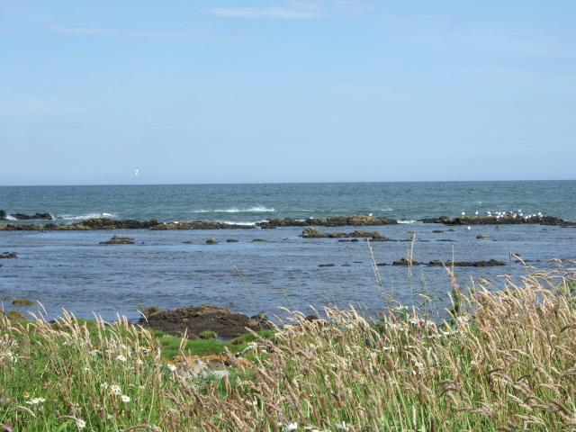Seabirds at Doolie Ness