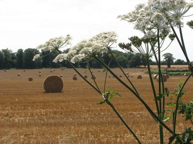 Farmland, Blickling Road