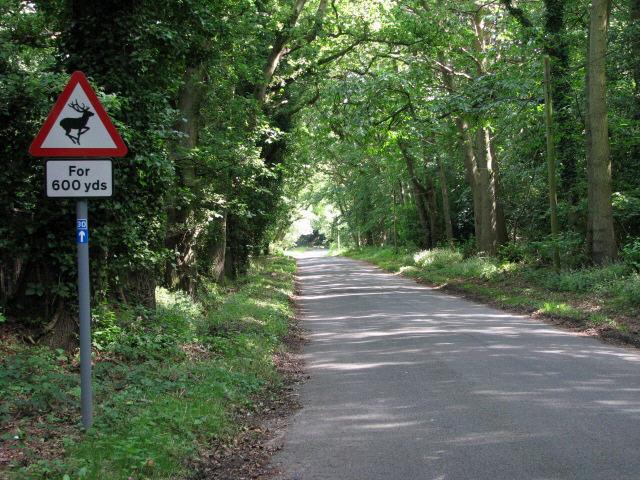Selbrigg Road