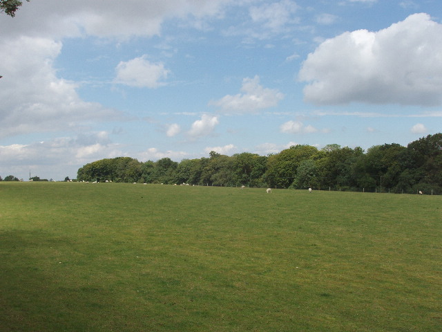 Pasture by Cowleaze Wood