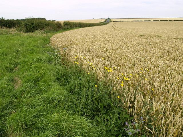 Fields near the B1248