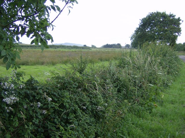 Hedgerow near Cridmore Farm