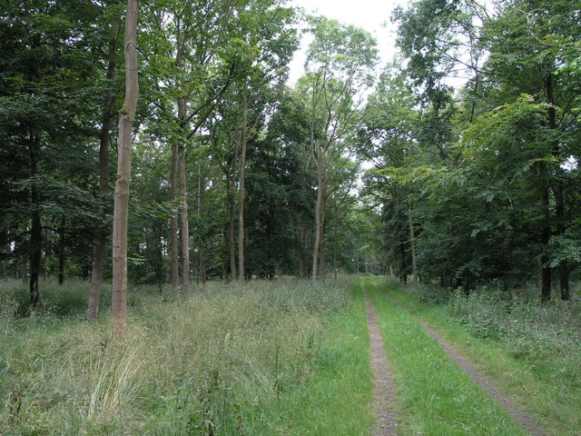 Ladyclose Wood.