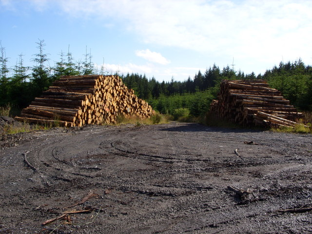 Timber Stack near Cairnfore