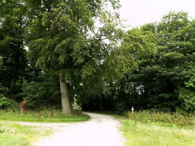 Tracks near Black Plantation