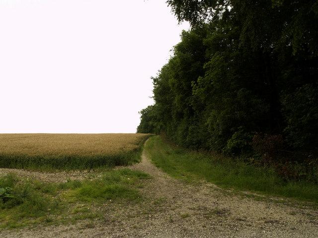 Bridleway next to Black Plantation