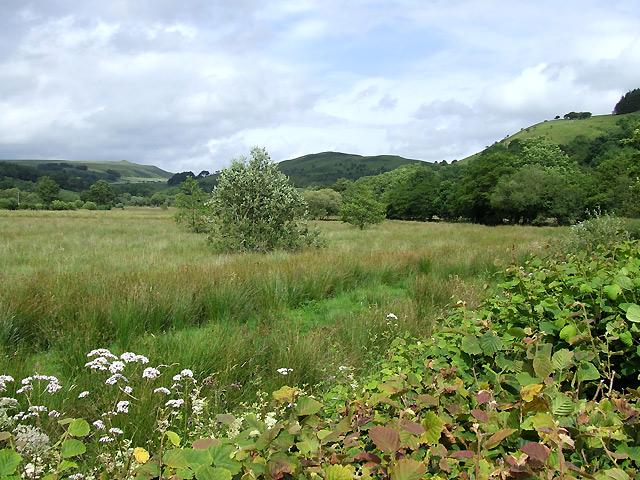 Rough Grazing Land on the Floodplain, near nant-y-Llyn, Carmarthenshire