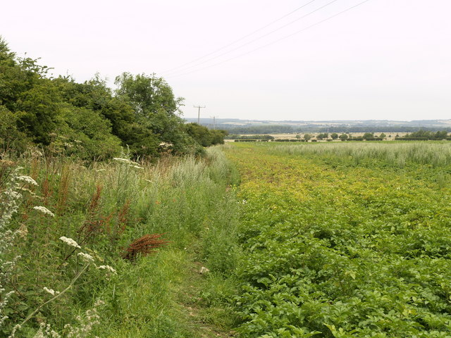 Unused Bridleway near Sherburn