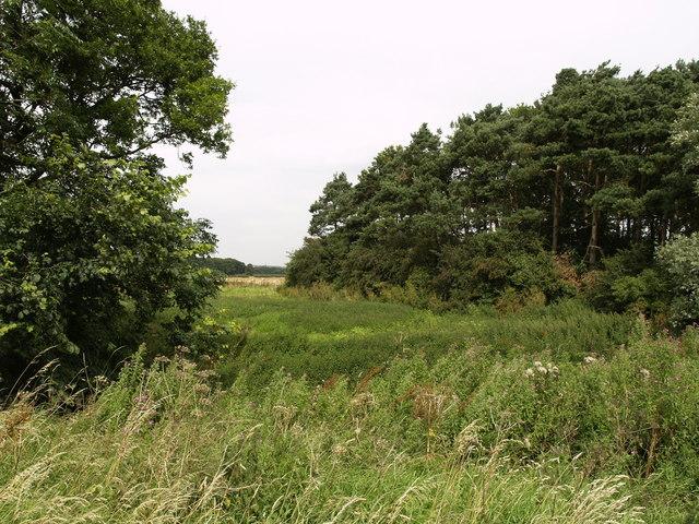 On the edge of Hay Bridge Plantation