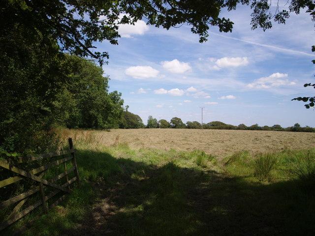 Field near Thornbury