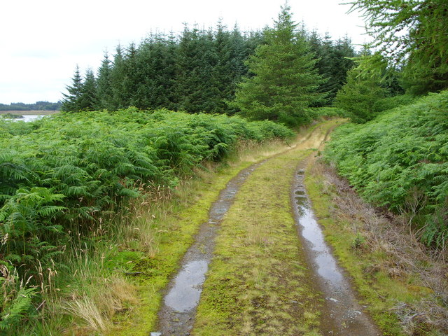 Forest Track beside Loch Maberry