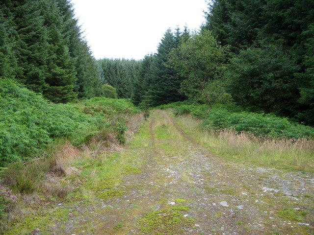 Forest Road to Barvalgans