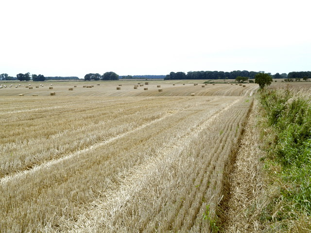 Stubble and Straw Field