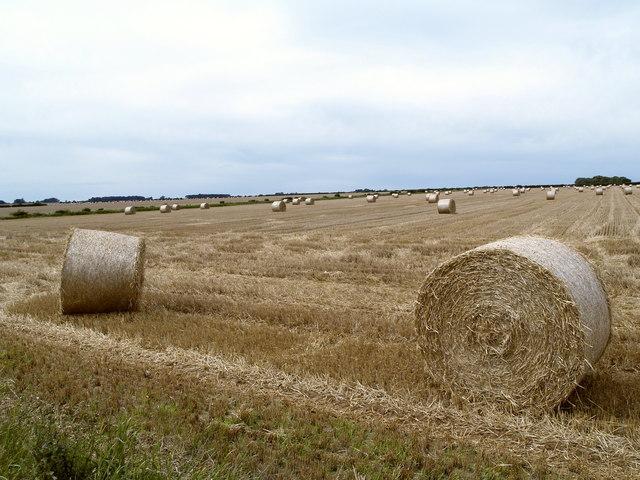 Straw Field near Sawdon