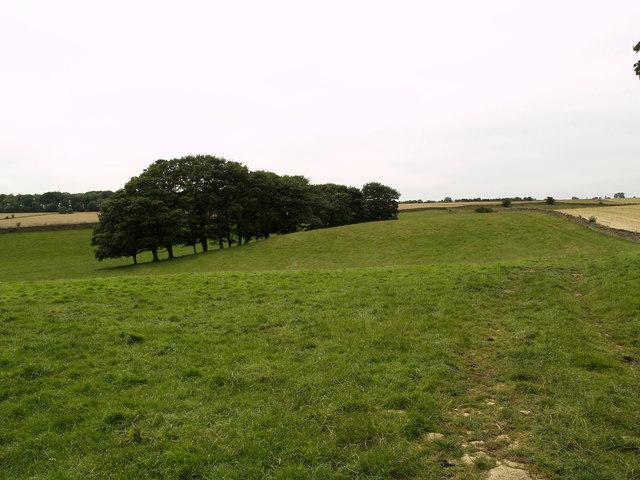 Farmland Bridleway
