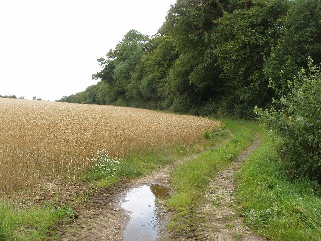 Wheat field, Aston Rowant