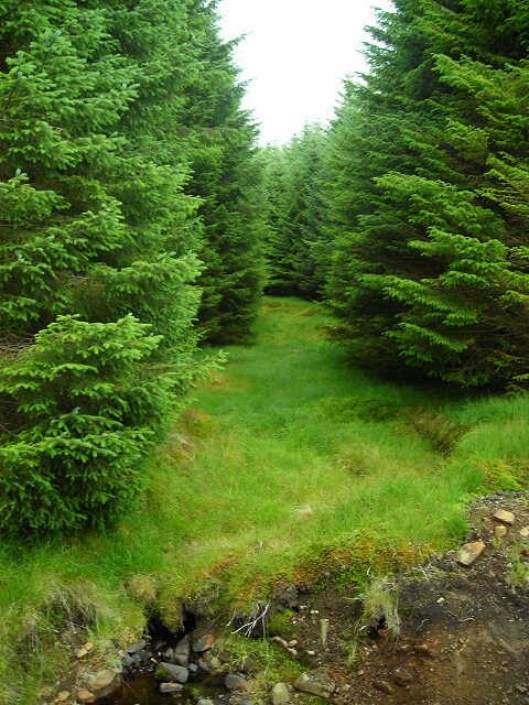 Gap for Stream in Forest on Beinn Bhan