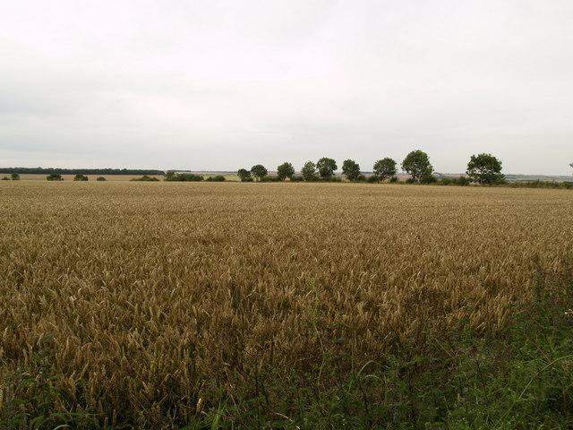 High Mowthorpe Farmland