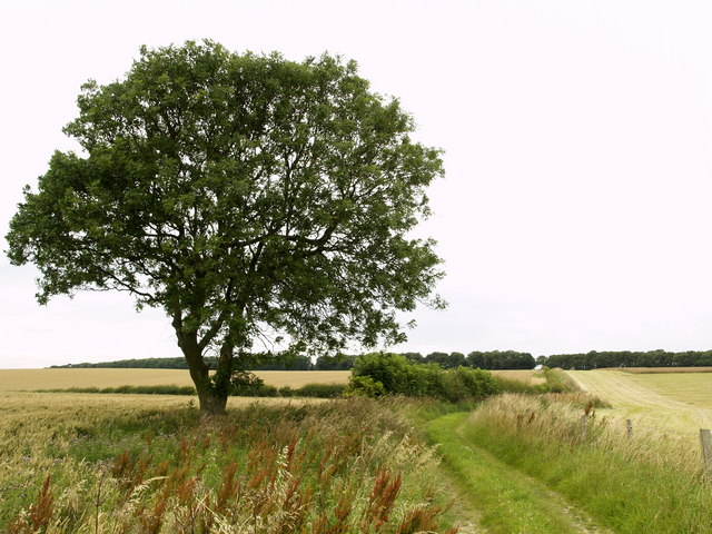 Tree and Bridleway