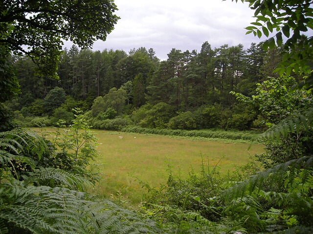 Field at Savary