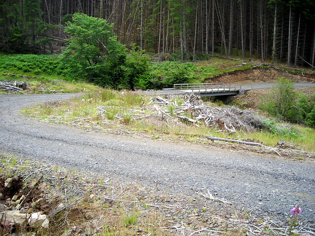 Forestry Track in Savary Glen