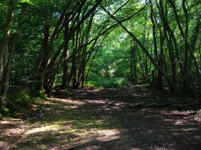 Footpath, Hoadley Wood