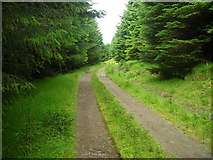 NM6549 : Track in Fiunary Forest by Iain Thompson