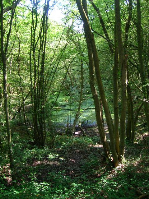 Pond, Dens Wood