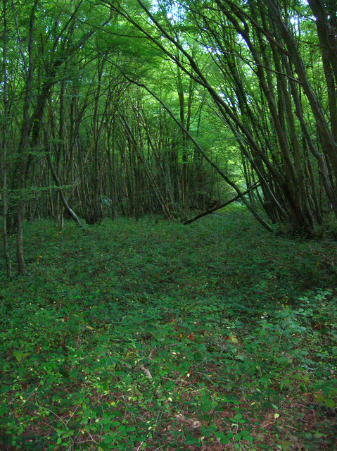 Dens Wood