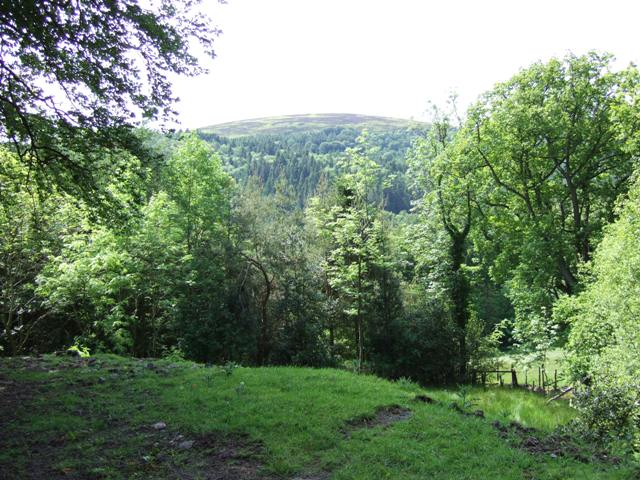 Linley Big Wood