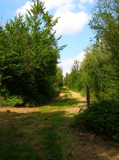Footpath Junction, Batt's Wood