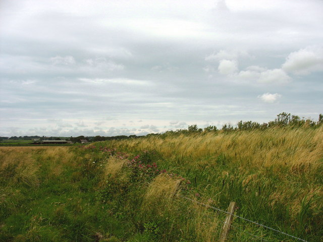 Drainage ditch and overgrown flood prevention embankment at the NE end of Cors Malltraeth