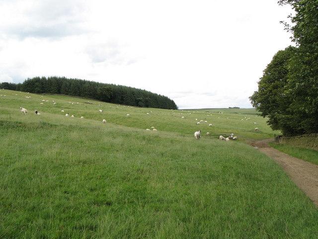 Pastures and Whitehill Plantation near Newbiggin