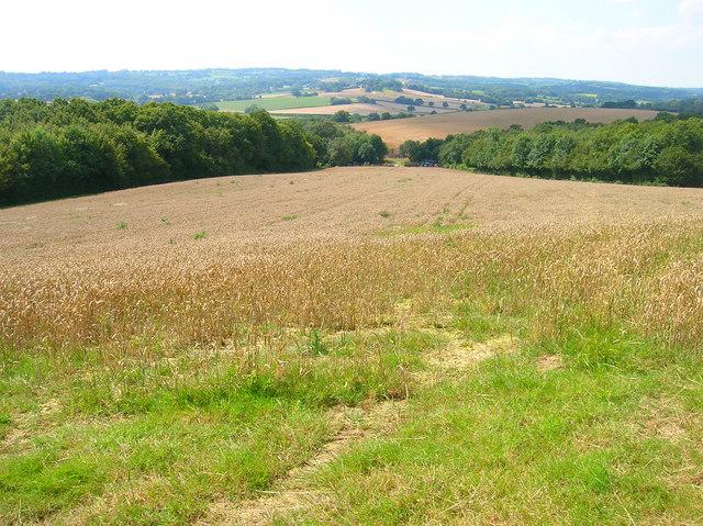 Corn Field near Bivelham Forge Farm