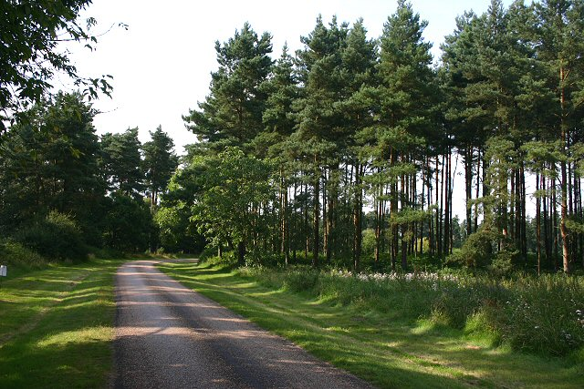 Toll road to High Lodge Forest Centre
