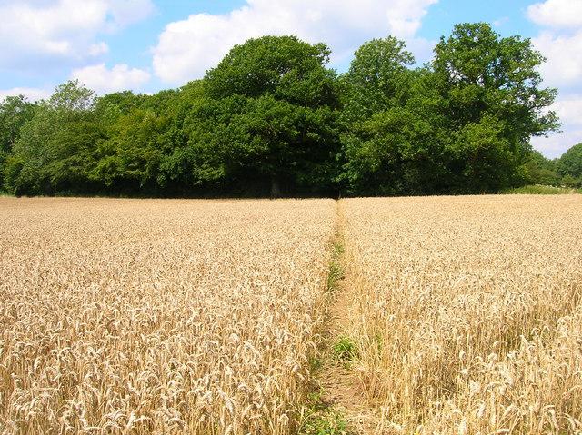Footpath to Newbridge Wood