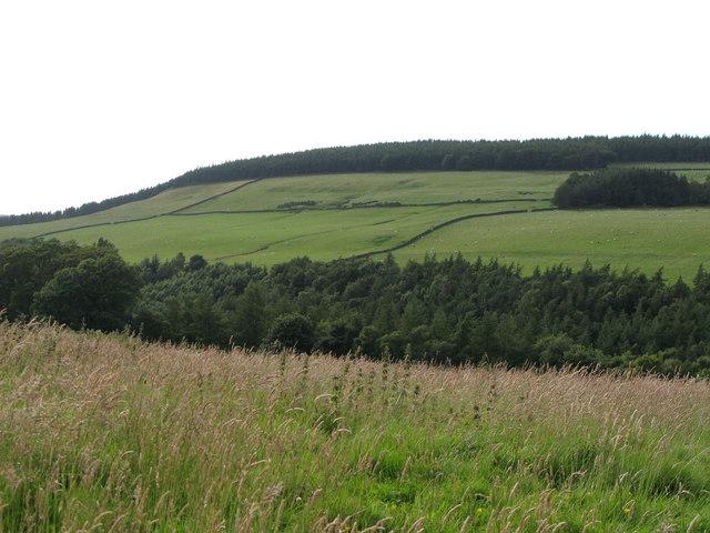 The valley of Beldon Burn (5)