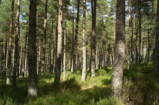 Mature forest at Culbo